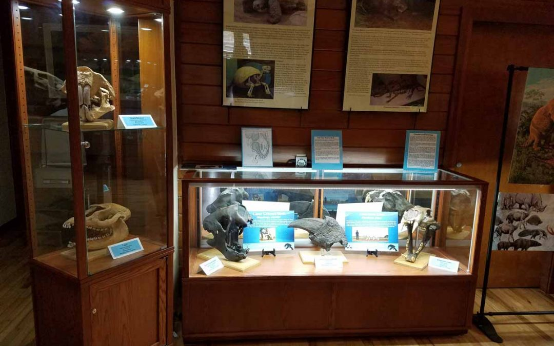 Grassy Waters Preserve's Display Cases