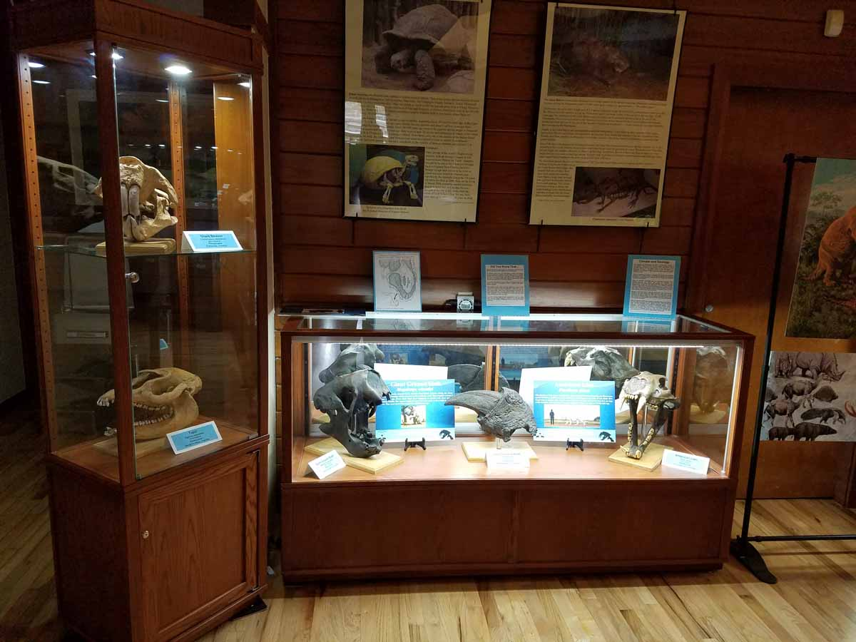 Artifacts Museum Display Cases